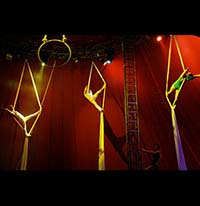 photo of aerial performers