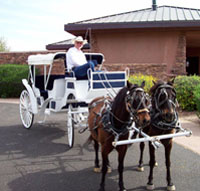 Horse drawn white carriage with driver